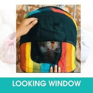 LOOKING WINDOW